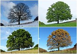 Students' favorites seasons